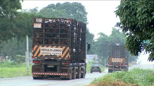 Tráfego de carretas pela Suzano aumenta risco de acidentes em BR's