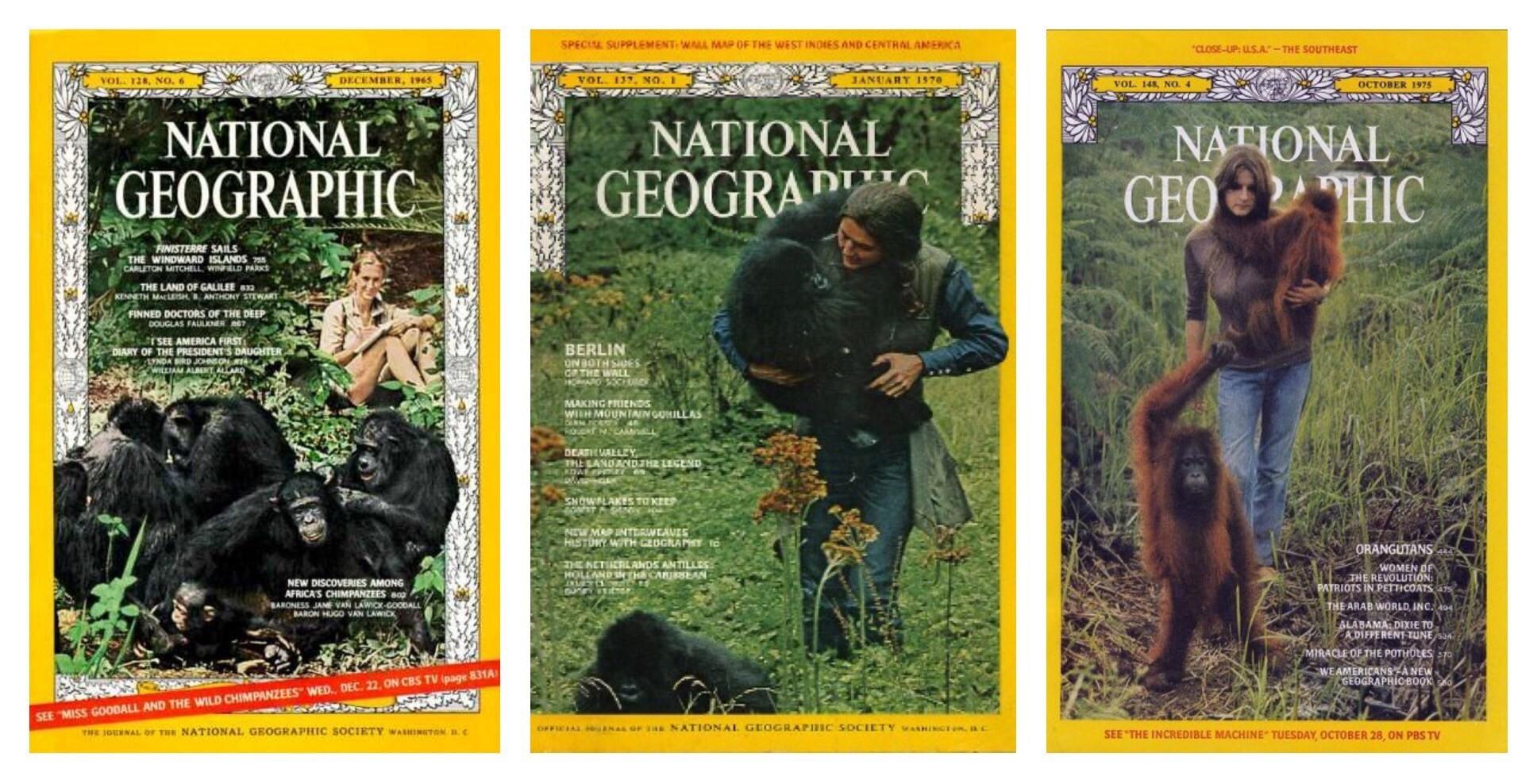 """""""Trimatas"""" nas capas da National Geographic (Foto: via KateOnConservation)"""