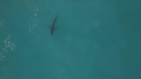 """Após vitória, Medina comenta presença de tubarão em J-Bay: """"Não vi"""""""