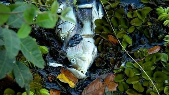 Peixes voltam a aparecer mortos em rio na região de Mendonça e Sales