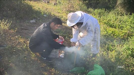 Projeto ensina a criar abelhas em área de mangue em Florianópolis
