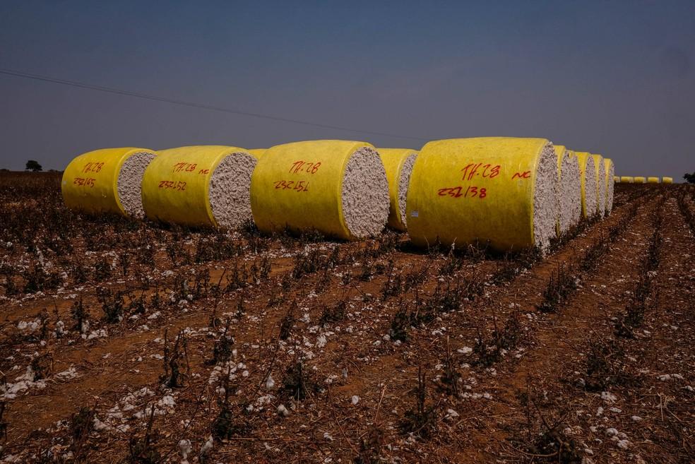 Produção de algodão deve bater record, segundo IBGE — Foto: Mayke Toscano/Secom-MT
