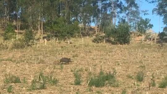 Caça ilegal de animais silvestres preocupa em Bragança Paulista