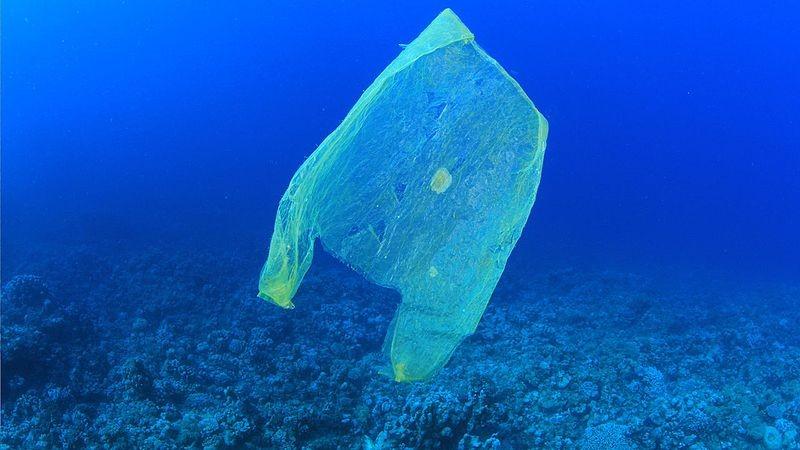 Poluição de plástico nos oceanos prejudica os animais das regiões mais profundas (Foto: MichaelisScientists/Wikimedia Commons)