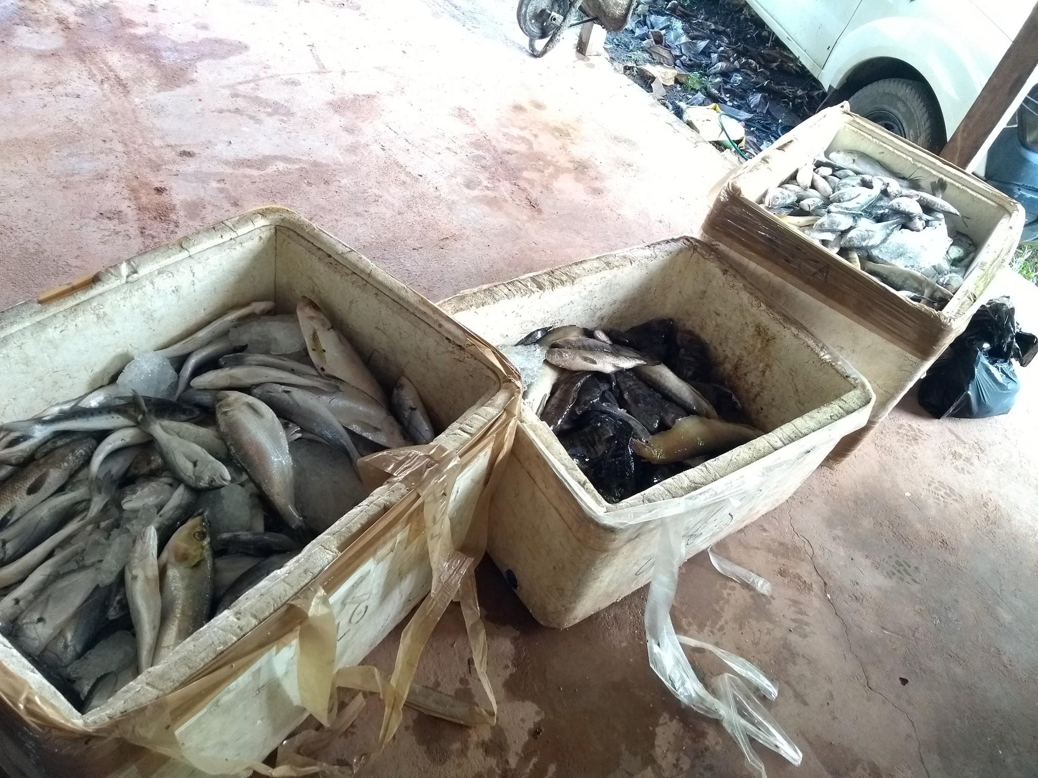 Polícia apreende 200 quilos de pescado proibido para consumo em Santana