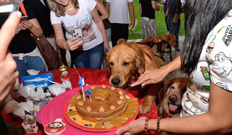 Veterinária de Itapetininga investe em bolos caninos — Foto: Arquivo Pessoal