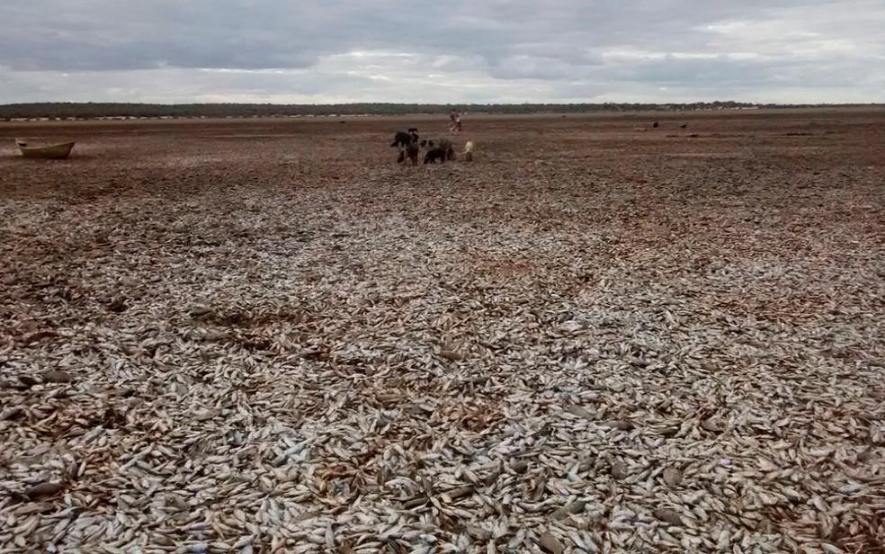 Lagoa está quase seca e pode ficar totalmente sem água nos próximos dias (Foto: Secretaria de Meio Ambiente/ Divulgação)
