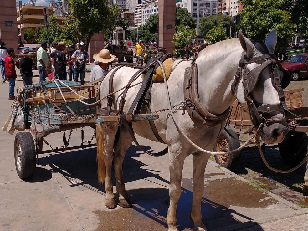 Carroceiros se reuniram na Praça da Estação e chegaram à Avenida Afonso Pena na tarde desta terça-feira (19) — Foto: Associação dos Carroceiros e Carroceiras Unidos de Belo Horizonte/Divulgação