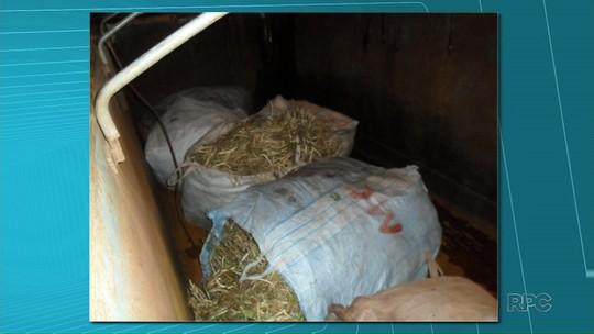 Ladrões furtam 600 quilos de feijão da roça em Ribeirão do Pinhal