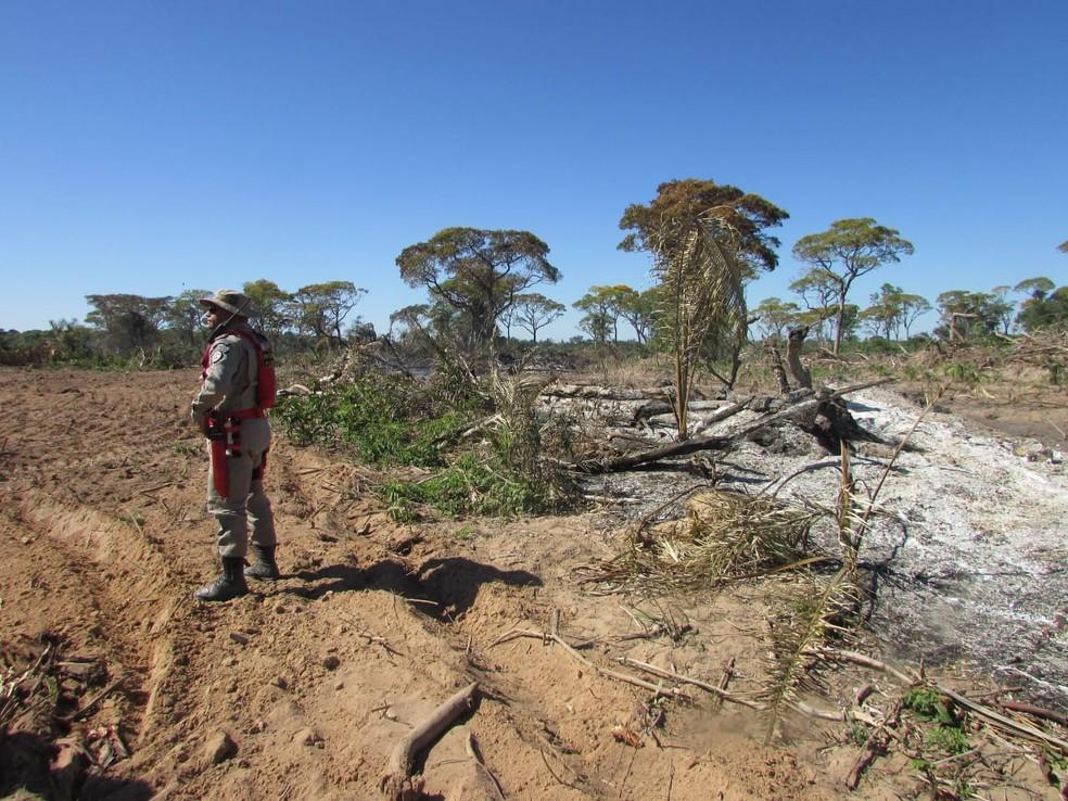 Fiscais encontraram desmatamento e queimada em propriedade em Barão de Melgaço, a 121 km de Cuiabá, no Pantanal mato-grossense (Foto: Sema-MT/Assessoria)