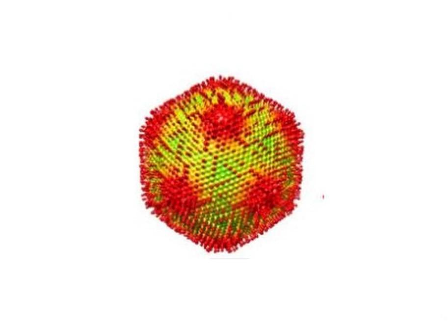 Ilustração do Medusavírus (Foto: G. Yoshikawa et al./J. Virol. 2019 (CC BY 4.0))