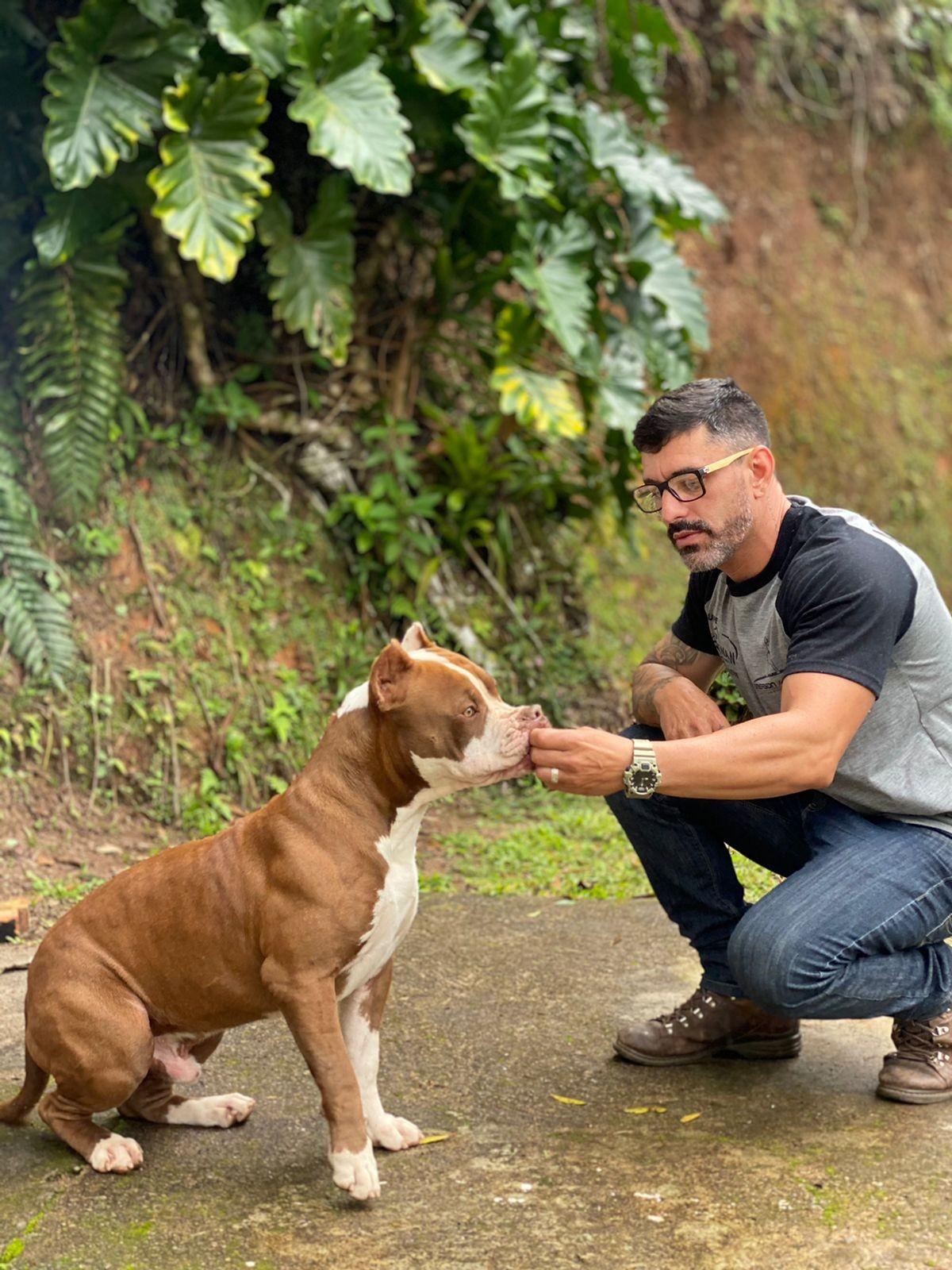 Ataque de pitbull: Como se defender em caso de perigo iminente