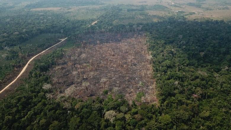 desmatamento (Foto: Verde Brasil/17)
