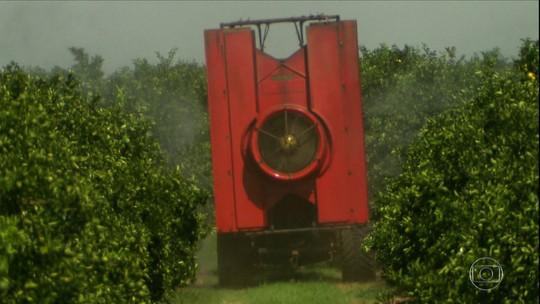 Controle biológico cresce no campo e ajuda na redução de custos da lavoura