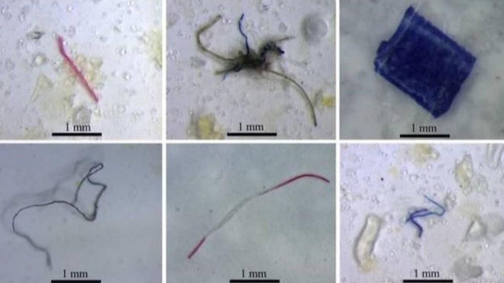 Partículas de plástico encontradas em peixes que vivem em nascentes e riachos amazônicos. — Foto: LABECO/UFPA