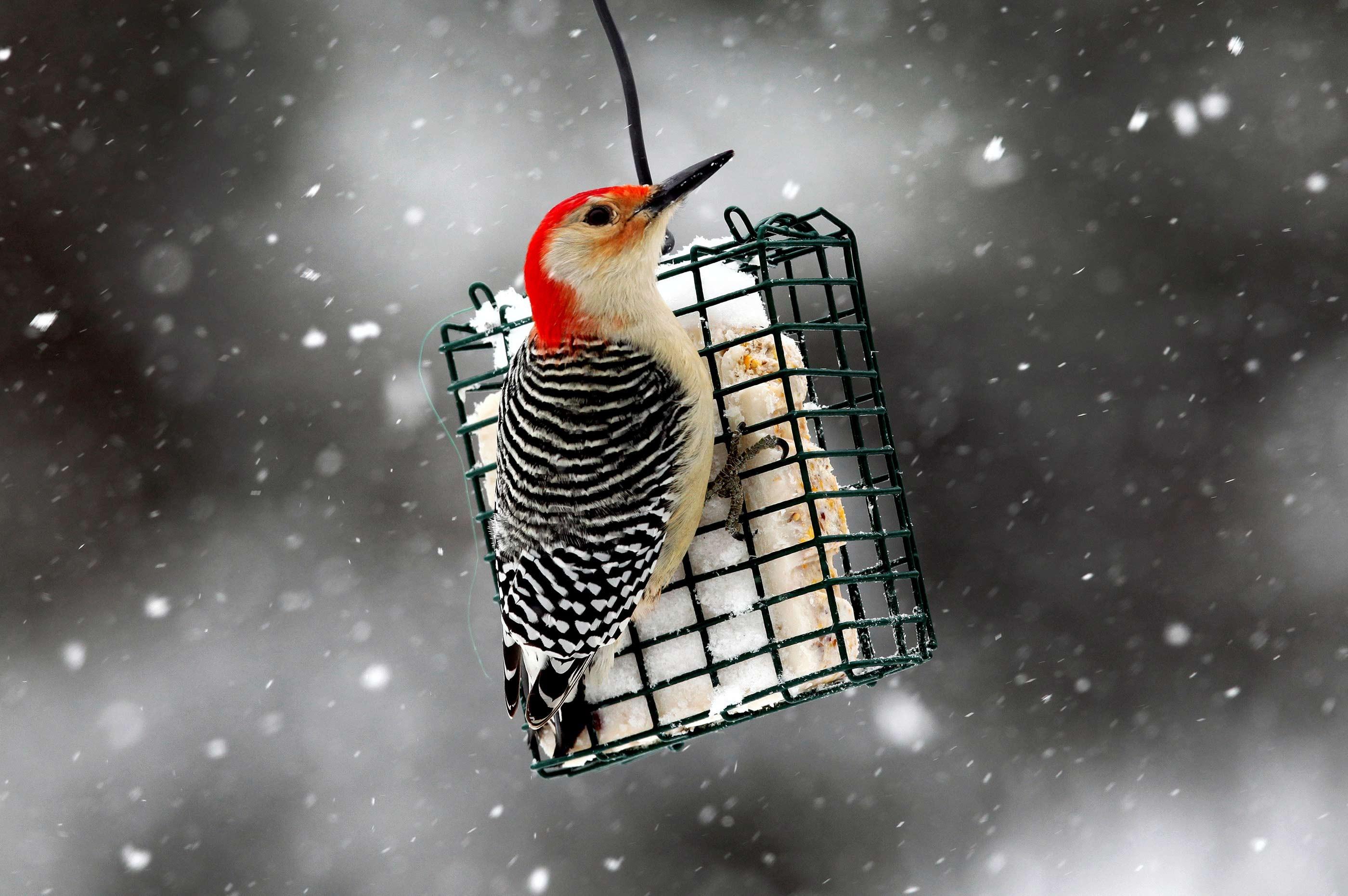 América do Norte perdeu 3 bilhões de aves desde 1970 - Notícias - Plantão Diário