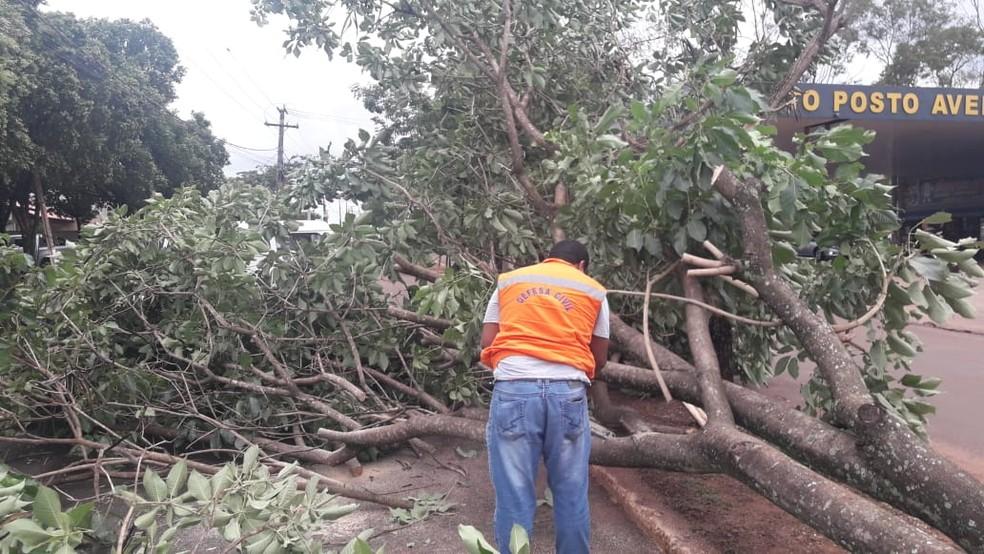 Defesa Civil e bombeiros trabalham na retirada de árvores que caíram com forte chuva. — Foto: Defesa Civil de Ivinhema/Divulgação