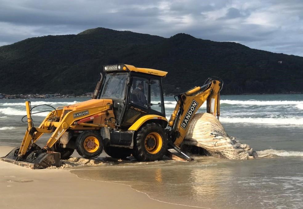 Máquina retroescavadeira foi utilizada para enterra animal na praia — Foto: Regina Reis/R3 Animal