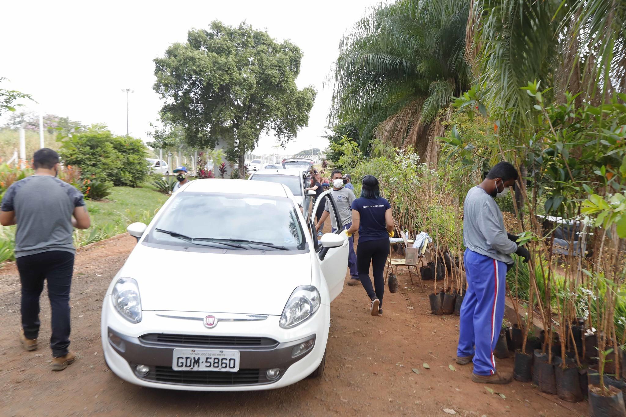 Viveiro municipal de Rio Preto faz drive-thru de mudas para celebrar o 'Dia da Árvore'