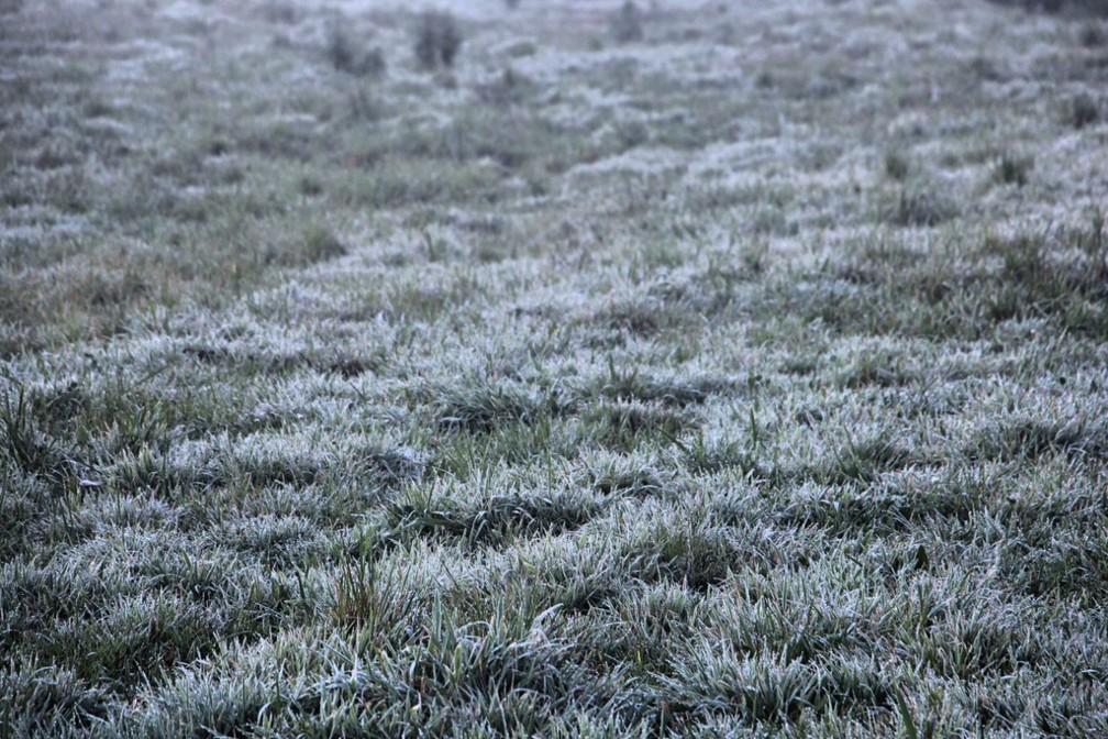 Vegetação amanheceu com uma fina camada de gelo em São Joaquim — Foto: Mycchel Legnaghi/ São Joaquim Online