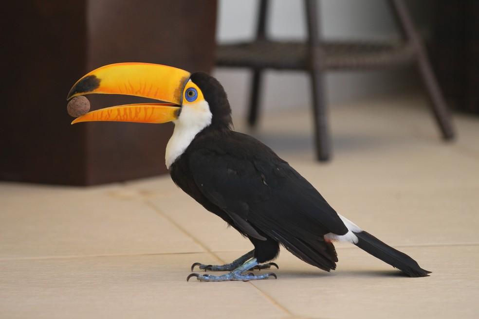 Apelidada de Juju, a ave é considerada mascote do condomínio (Foto: Giulia Bucheroni/TG)