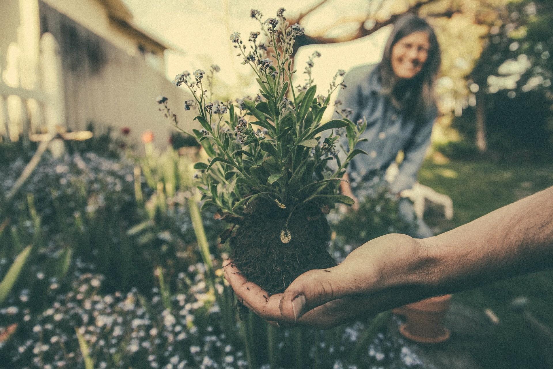 Vale revisar o desenvolvimento das plantas antes de realizar a prova do Enem (Foto: Pixabay)