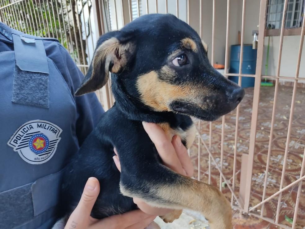 Filhote de cachorro vítima de maus-tratos foi levado à clínica veterinária em Bauru — Foto: Polícia Militar e Polícia Civil/Divulgação