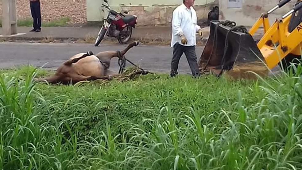 Corpo de cavalo sendo retirado de córrego onde foi encontrado morto — Foto: Arquivo pessoal