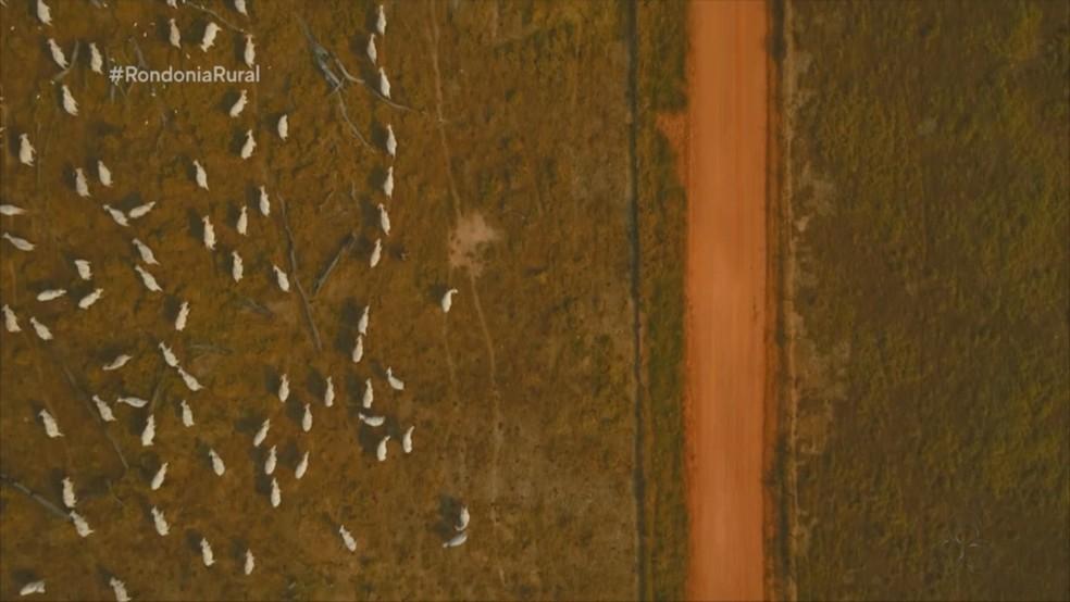 Pecuarista busca aliar produtividade a preservação ambiental — Foto: Reprodução/ Rede Amazônica