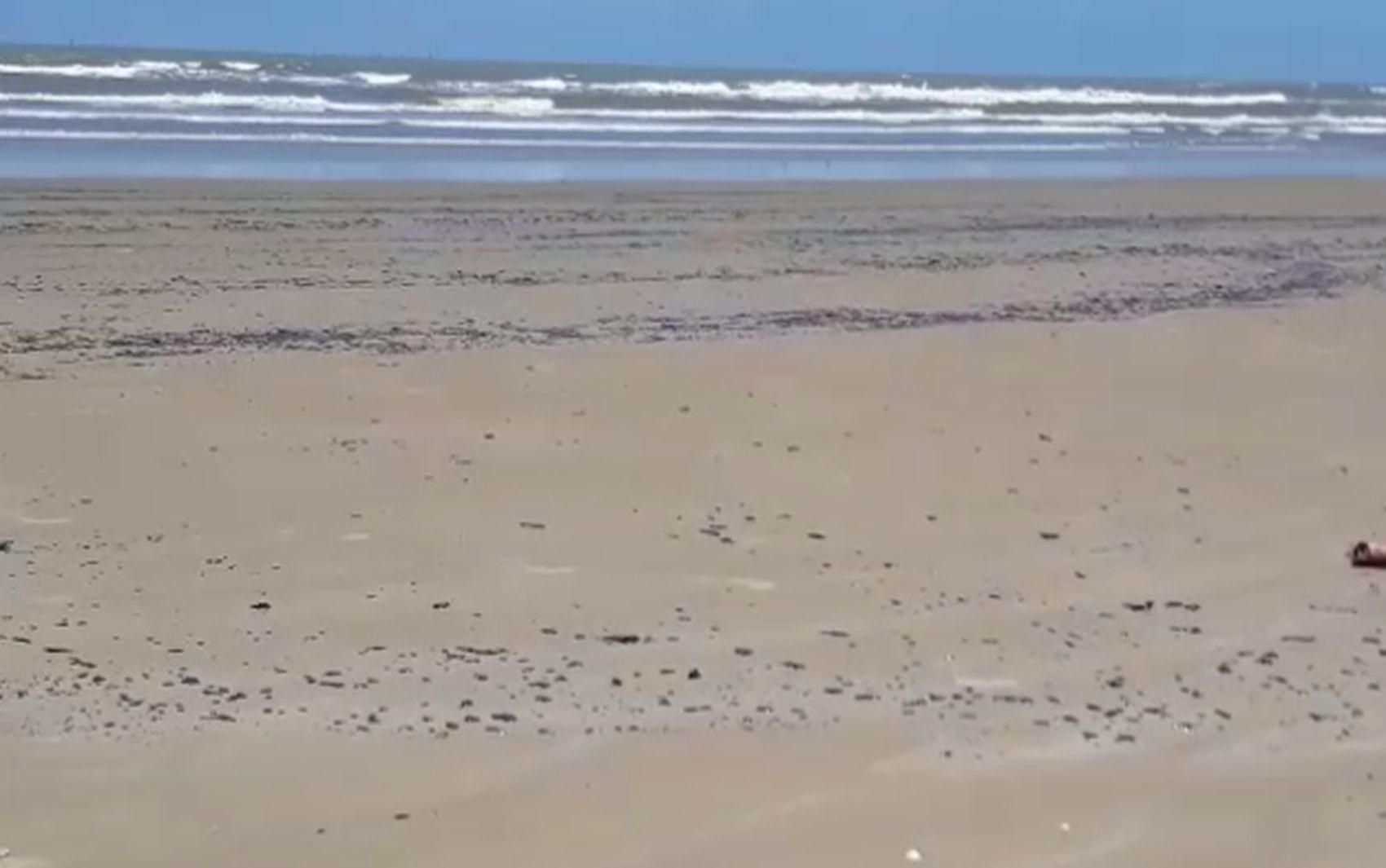 Manchas de óleo são encontradas em praias de Aracaju - Notícias - Plantão Diário