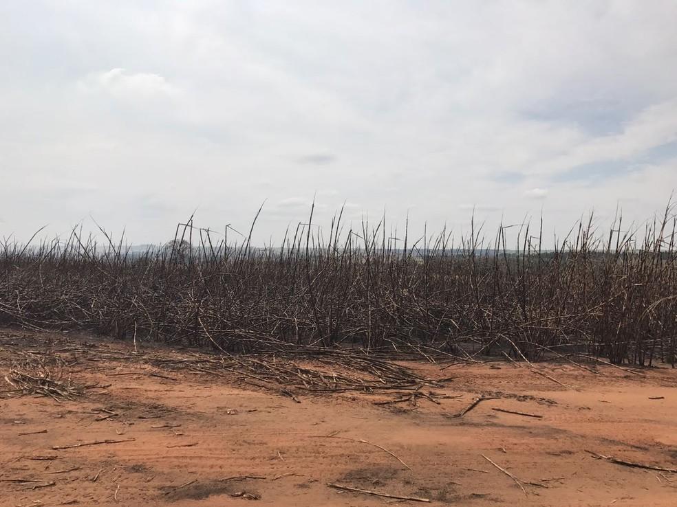 Estimativa é que 50% de um canavial com mil hectares foi queimado (Foto: Divulgação)