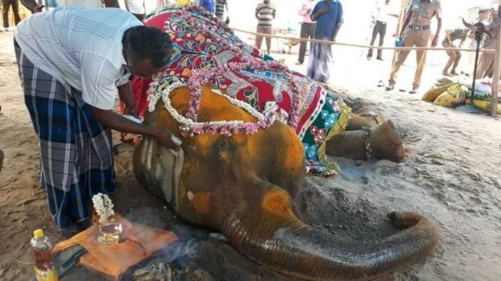 A elefante Rajeshwari morreu apenas dias depois que um defensor de animais conseguiu permissão para sacrificá-la em um tribunal (Foto: BBC)
