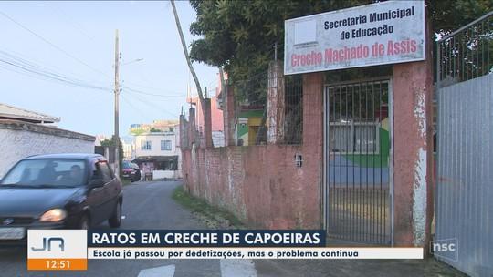 Creche de Florianópolis está infestada de ratos