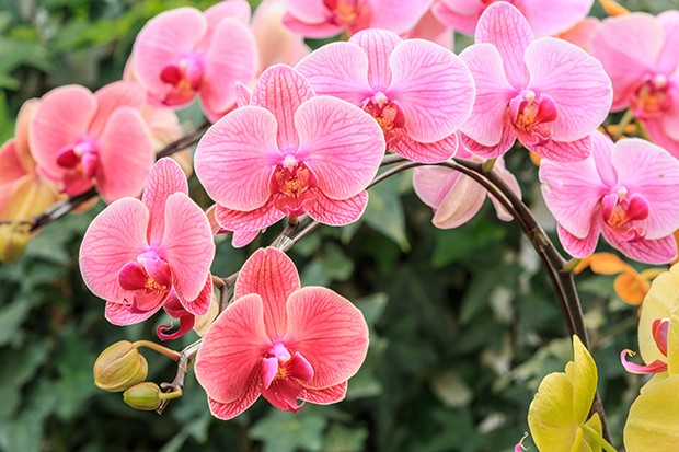 Beautiful orchid flowers bloom in natural world (Foto: Getty Images/iStockphoto)