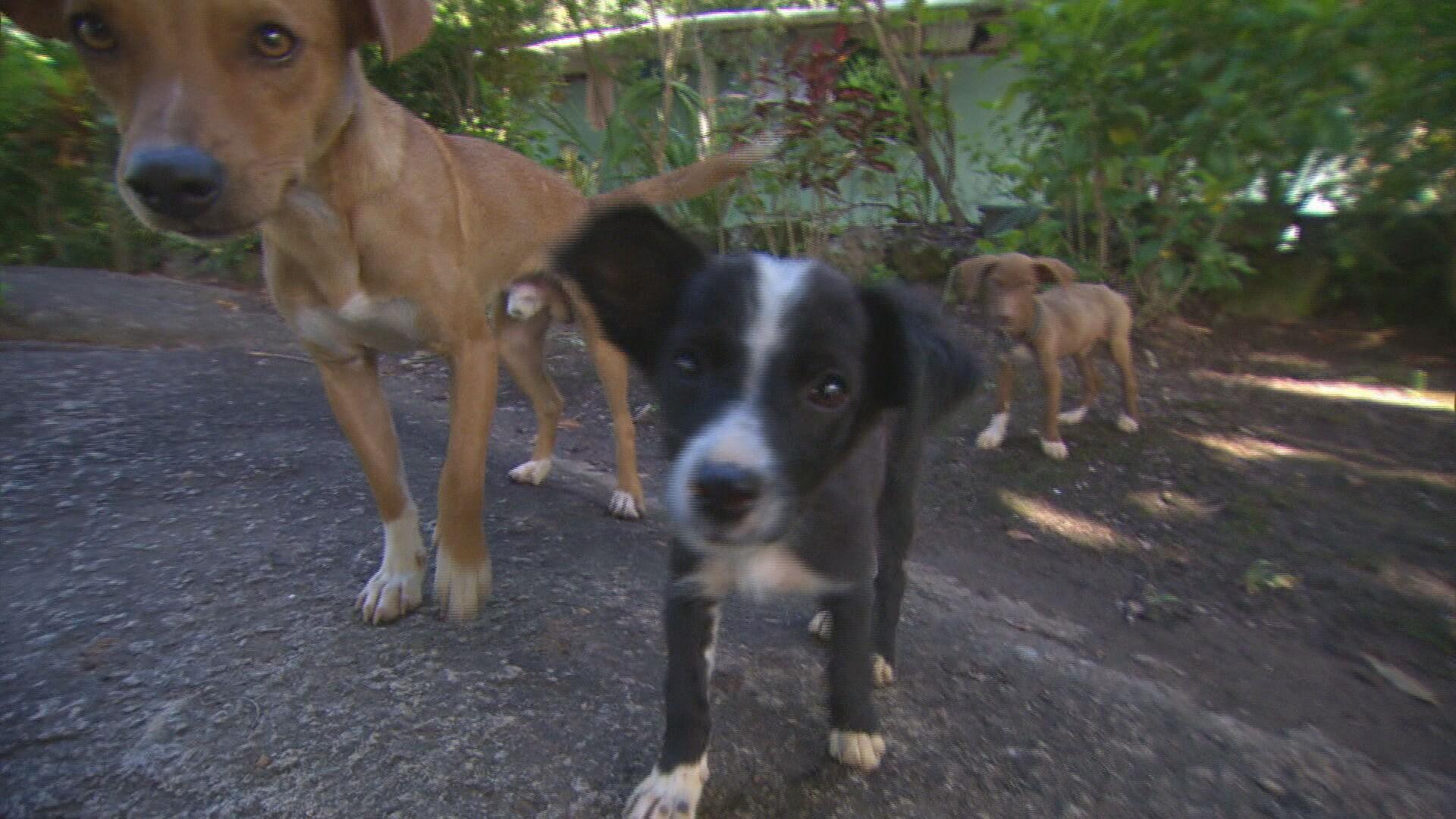 Busca por adoção e quantidade de animais abandonados crescem na pandemia, diz ONG de Contagem