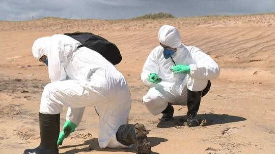 Apesar do óleo, Ibama não interdita praia em Linhares (ES)