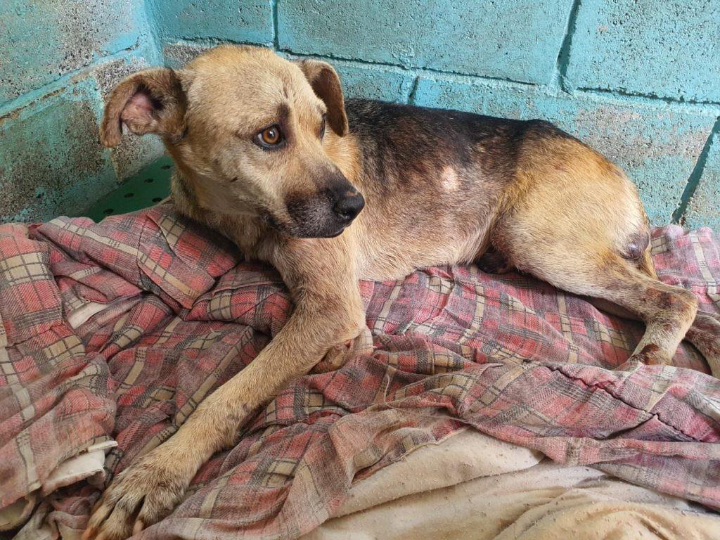 Em quatro meses, Sorocaba resgata mais de 70 animais vítimas de maus-tratos