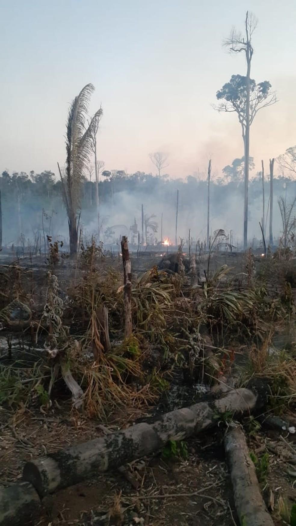 Área de reserva destruída por fogo, em Machadinho — Foto: WhatsApp/Reprodução