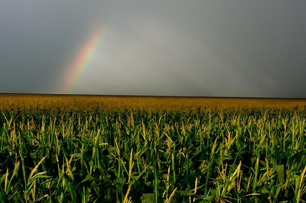 MT deve produzir  67,392 milhões de toneladas, segundo estimativa da Conab — Foto: José Medeiros/Gcom-MT