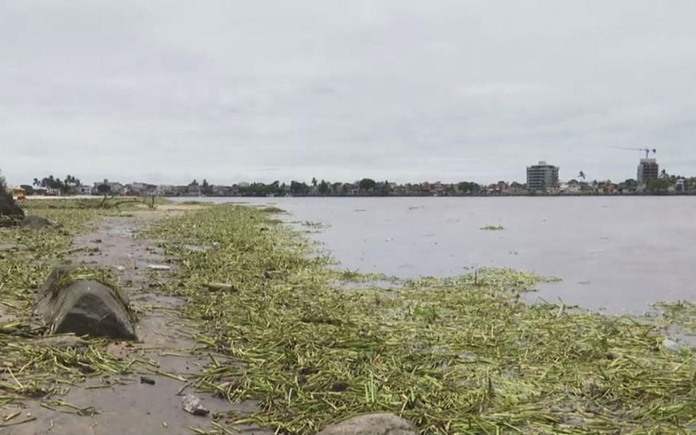 Praias de Ilhéus foram tomadas por baronesas  — Foto: Reprodução/TV Bahia