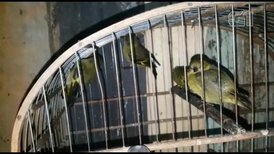 Polícia Ambiental apreende mais de 200 pássaros silvestres mantidos em cativeiro, em Curitiba e região