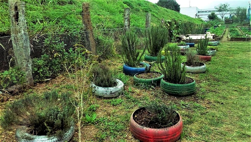 A horta comunitária situada no bairro Cajuru, em Curitiba, foi inaugurada no mês de julho de 2017 (Foto: Manoel Silva)