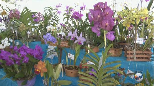 Exposição em São Carlos, SP, reúne cerca de 2 mil orquídeas até domingo