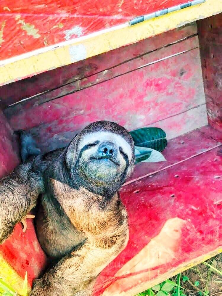 Mais de 1,5 mil animais silvestres são resgatados pelos bombeiros em áreas urbanas no Acre