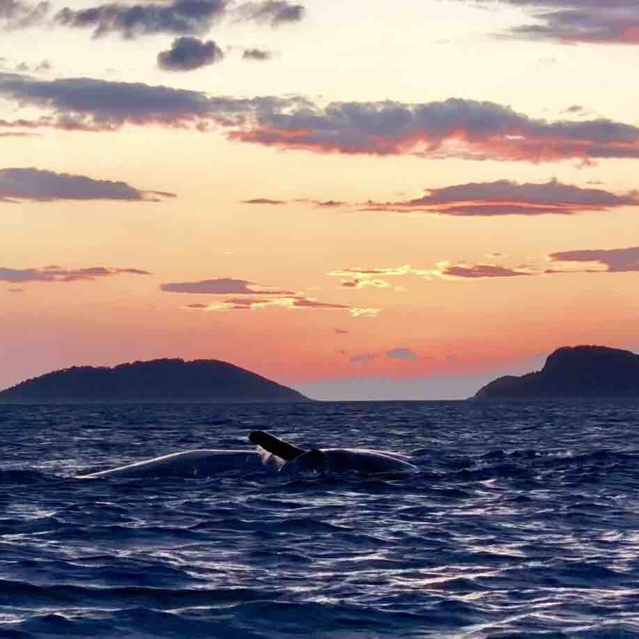 Baleia é flagrada amamentando filhote no litoral norte de SP; veja - Radio Evangelho Gospel