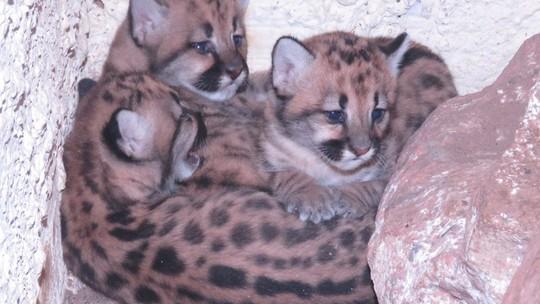 Foto: (Zoo de Teresina)