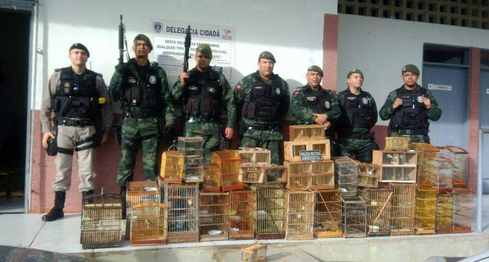 Mais de 200 aves silvestres foram apreendidas em Guarabira, Agreste da Paraíba, no mês de julho (Foto: Ten. Jerônimo/4º BPM)