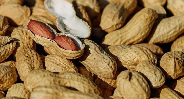 Pró-Amendoim completa 20 anos e setor comemora avanço no mercado internacional