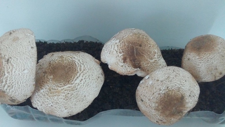 gr-responde-cogumelo (Foto: Anderson Scarquetti/Arquivo Pessoal)