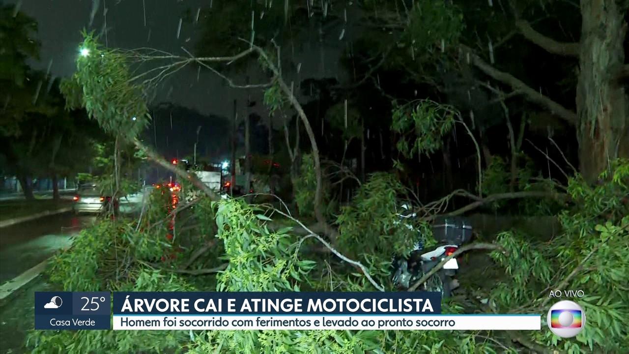 Árvore cai e atinge motociclista na zona sul
